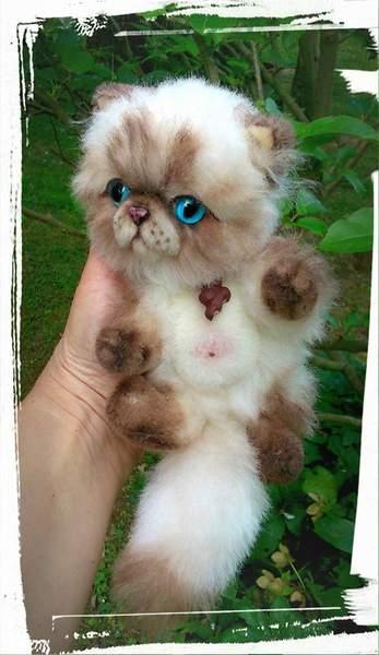 Cat S Eyes En Fran Ef Bf Bdais