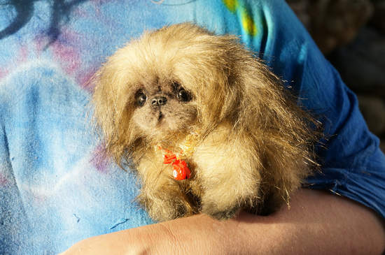 The Book of the Pekingese: From Palace Dog to the Present day