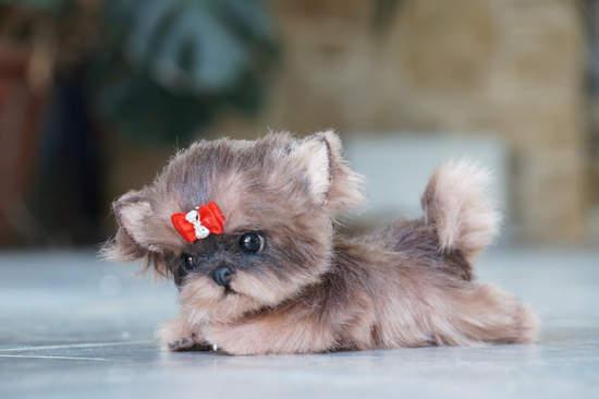 Puppy York By Tsybina Natali Bear Pile