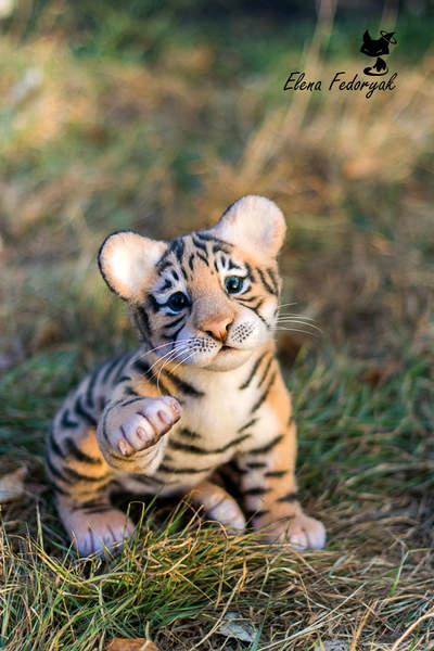 Tiger Cub Birusa By Elena Fedoryak Bear Pile
