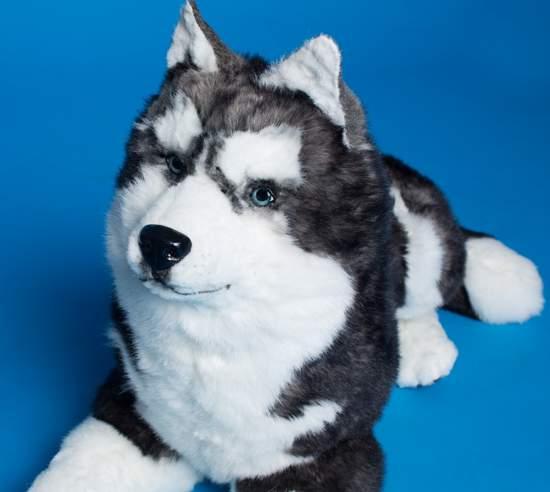 Dog Plush Husky Natural Size By Alina Biliakova Bear Pile