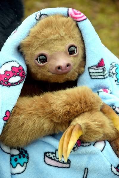 Baby sloth in pajamas By Elizaveta Shvetsova - Bear Pile